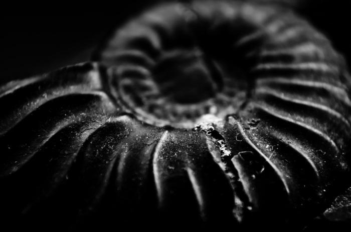 fosiles y la biblia