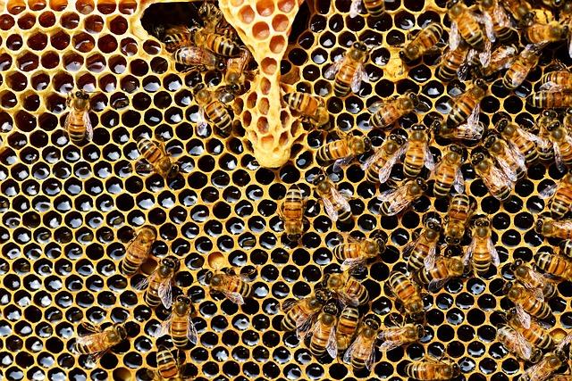 las abejas ingenieras de Dios