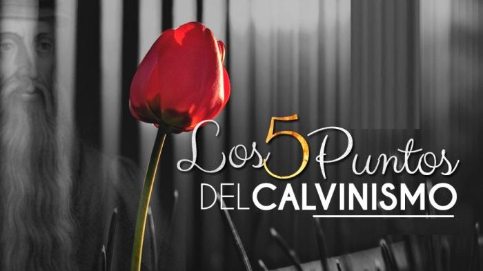 tulip los 5 puntos del calvinismo